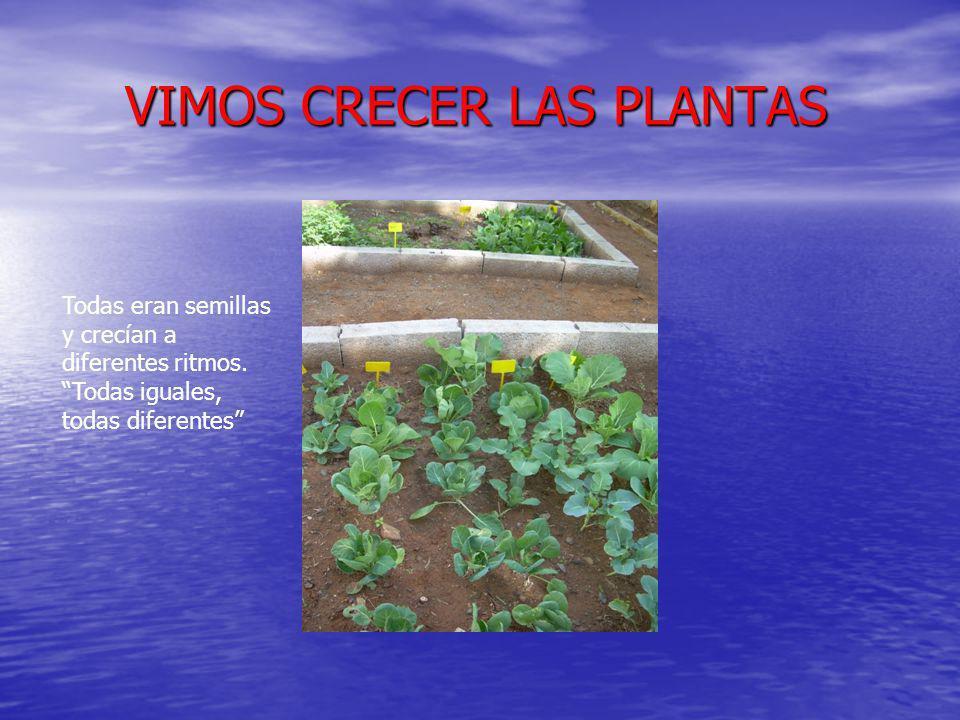 VIMOS CRECER LAS PLANTAS