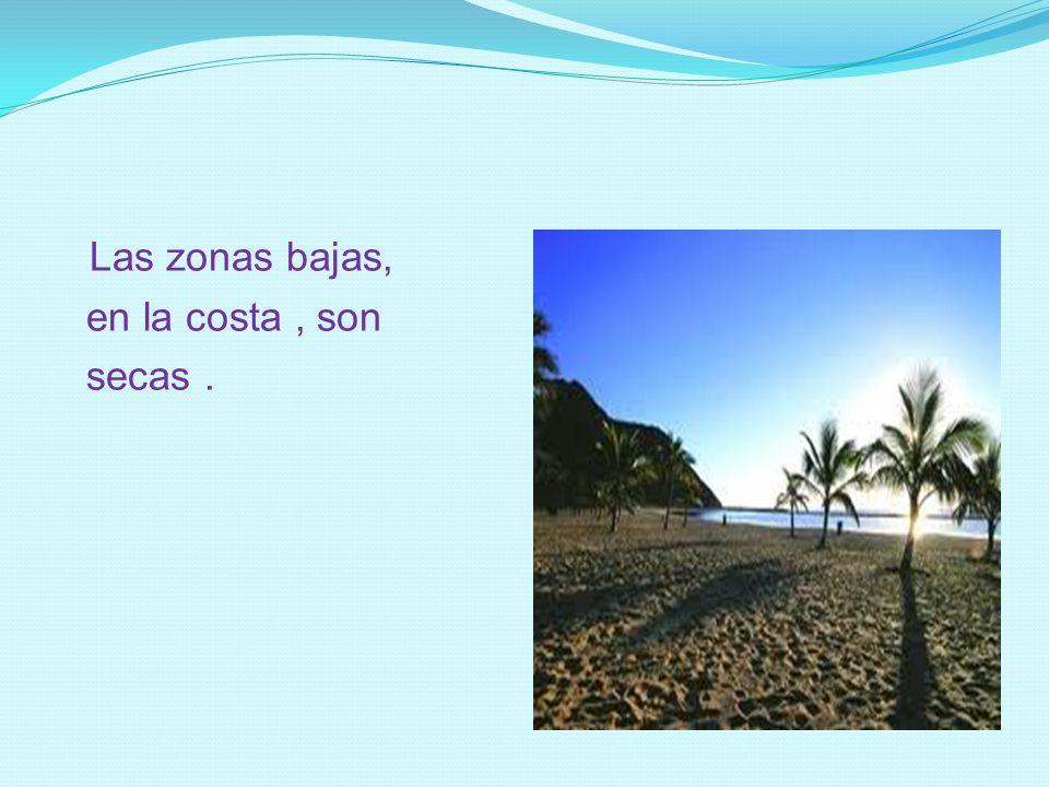 Las zonas bajas, en la costa , son secas .