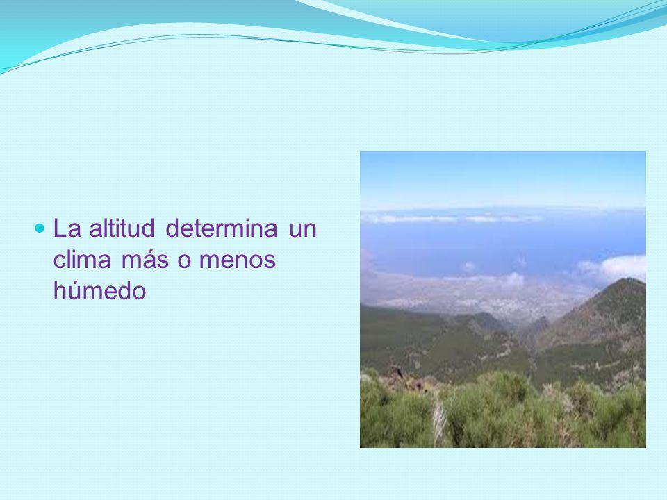 La altitud determina un clima más o menos húmedo
