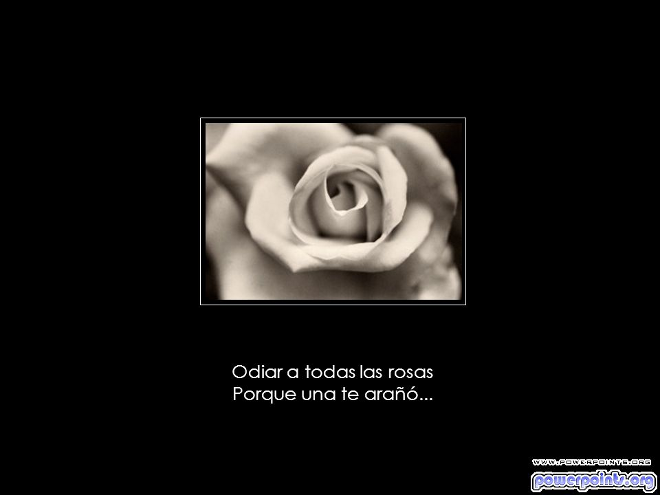 Odiar a todas las rosas Porque una te arañó...