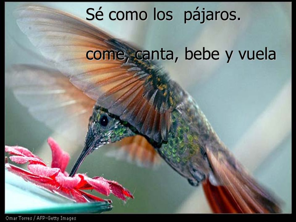 Sé como los pájaros. come, canta, bebe y vuela