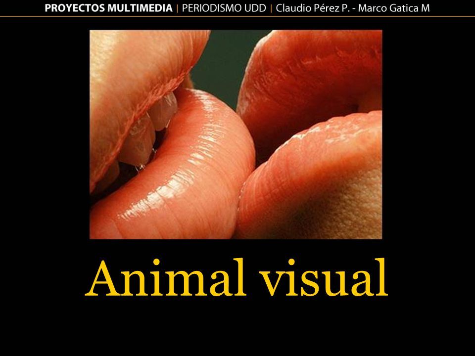Animal visual