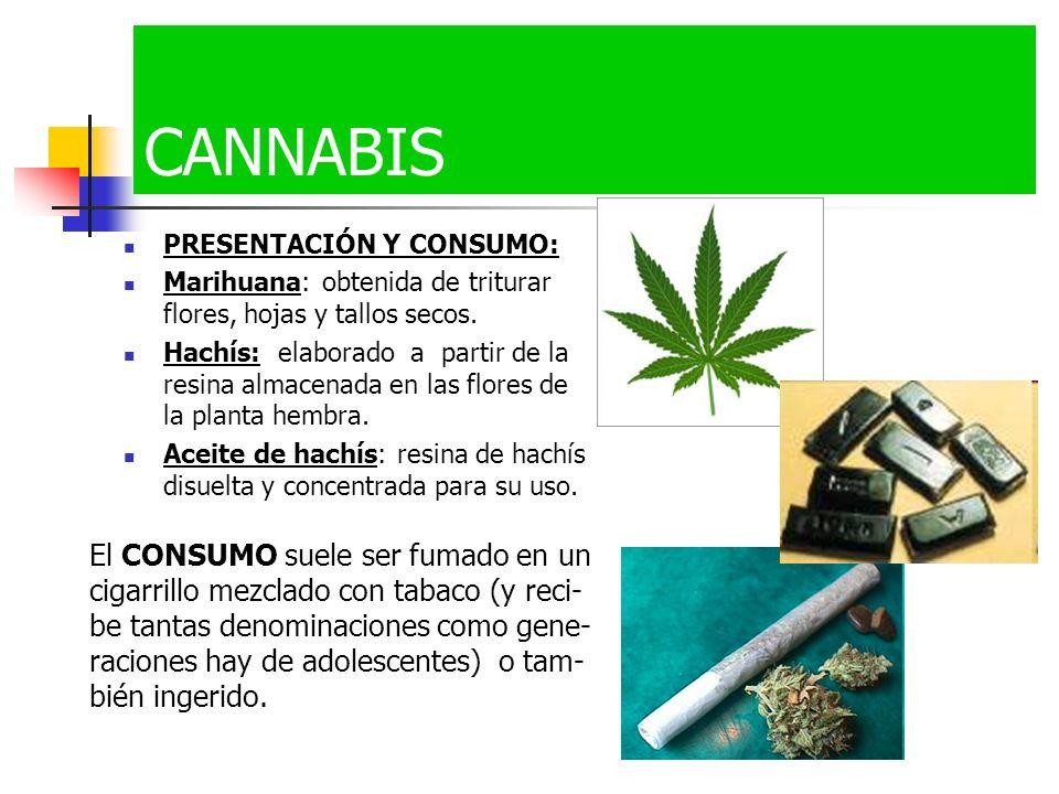 CANNABIS PRESENTACIÓN Y CONSUMO: Marihuana: obtenida de triturar flores, hojas y tallos secos.