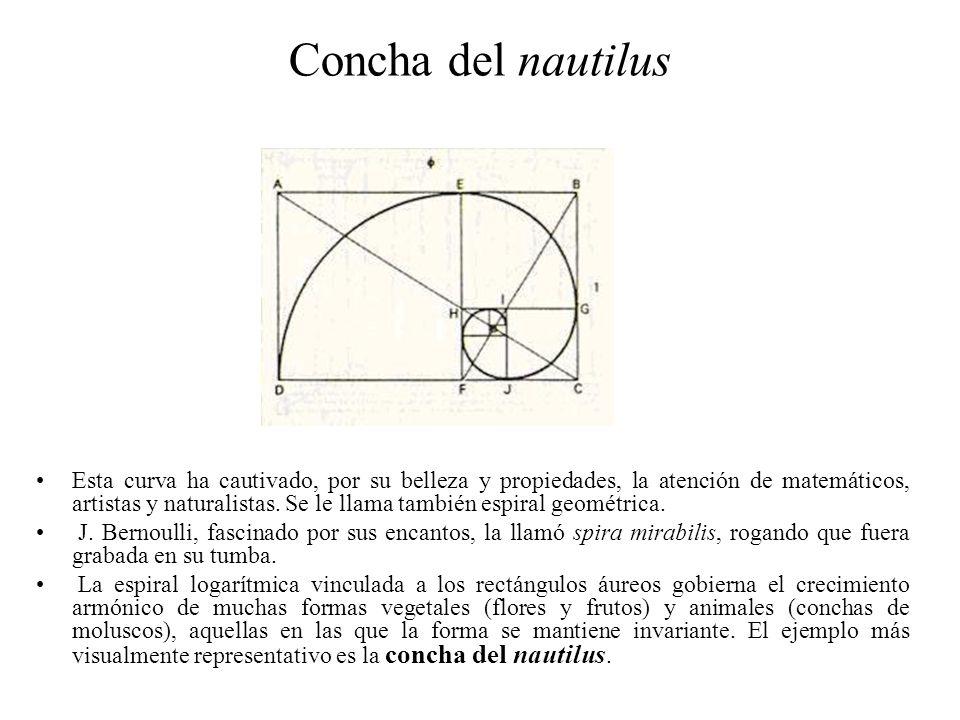 Concha del nautilus