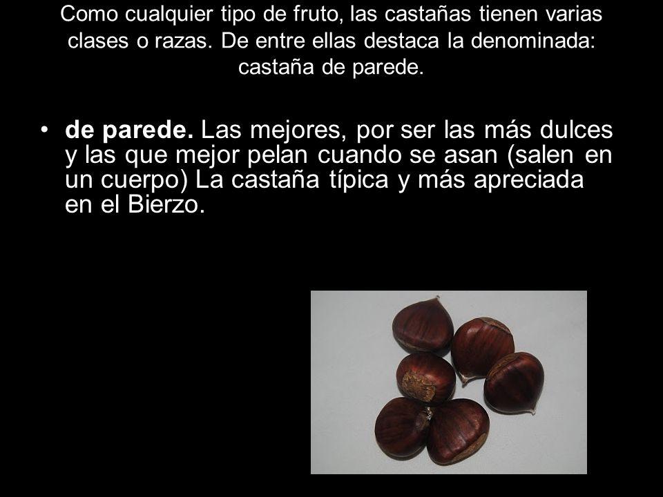 Como cualquier tipo de fruto, las castañas tienen varias clases o razas. De entre ellas destaca la denominada: castaña de parede.