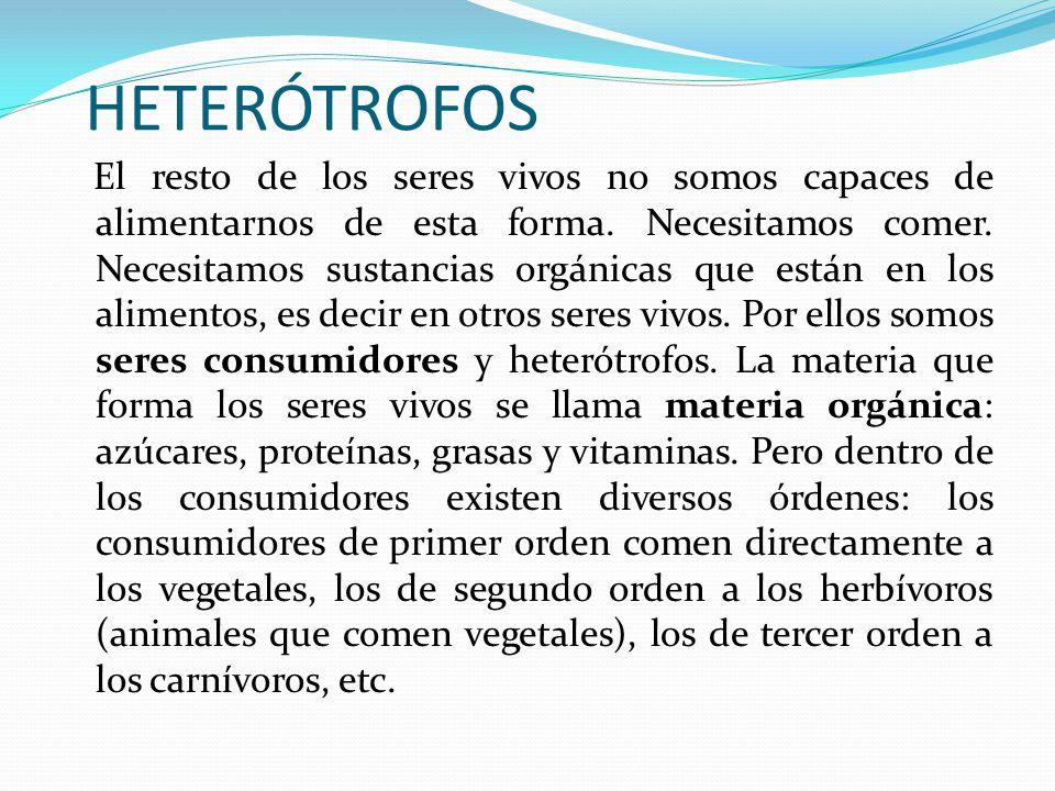 HETERÓTROFOS