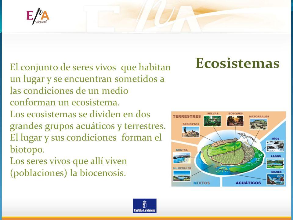 Ecosistemas El conjunto de seres vivos que habitan un lugar y se encuentran sometidos a las condiciones de un medio conforman un ecosistema.