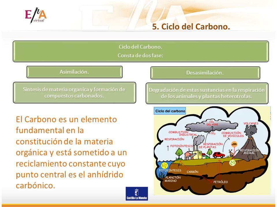 Sintesis de materia organica y formación de compuestos carbonados.