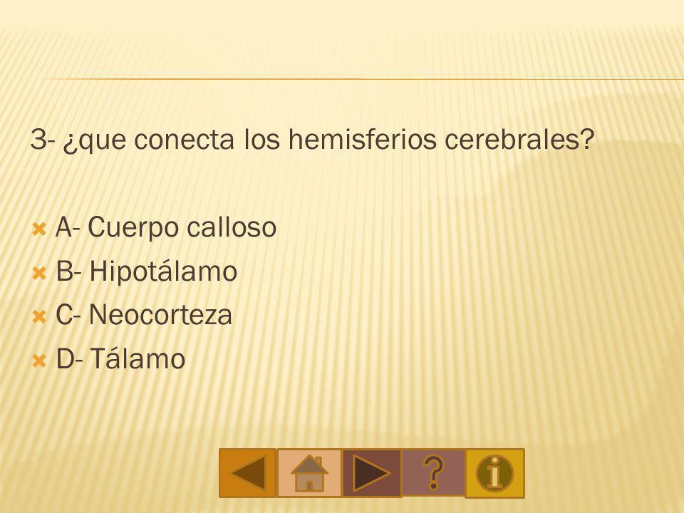 3- ¿que conecta los hemisferios cerebrales