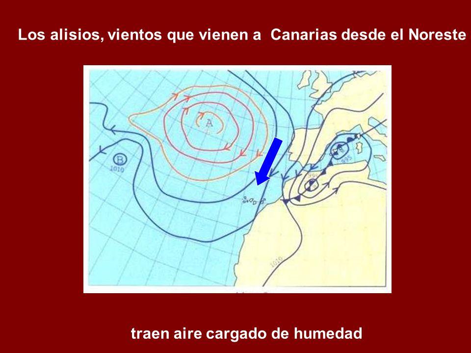 Los alisios, vientos que vienen a Canarias desde el Noreste