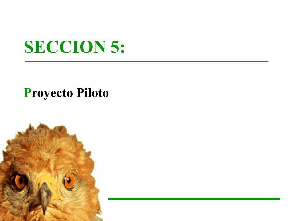 SECCION 5: Proyecto Piloto