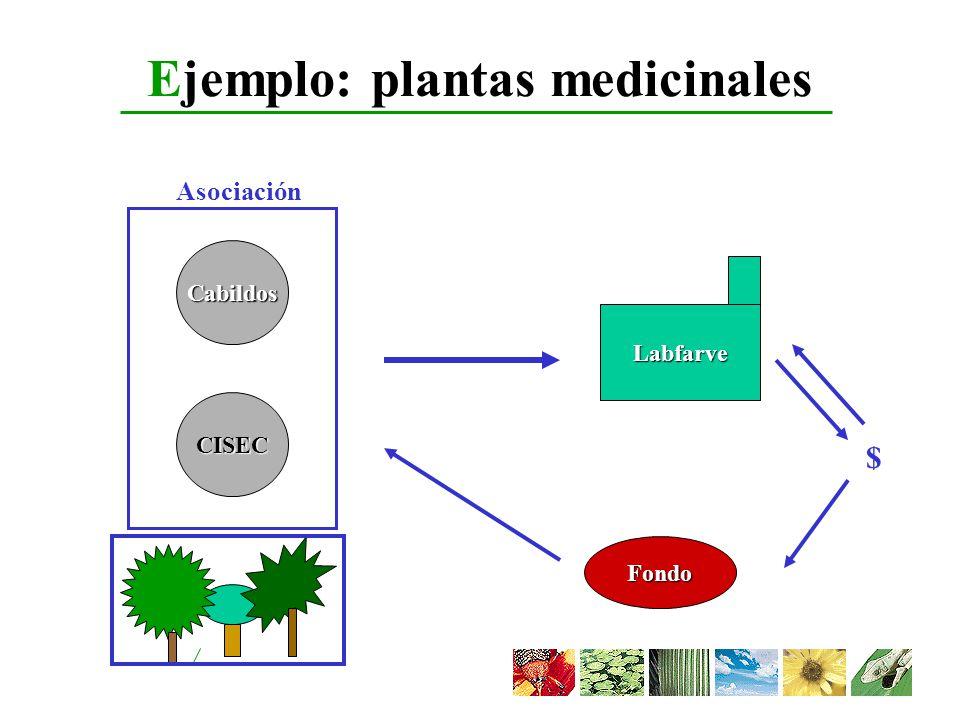 Ejemplo: plantas medicinales