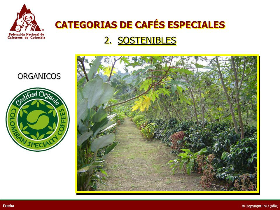 CATEGORIAS DE CAFÉS ESPECIALES 2. SOSTENIBLES