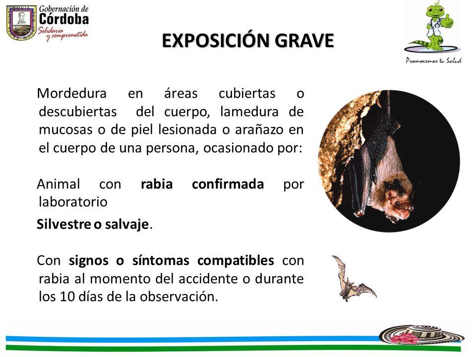 EXPOSICIÓN GRAVE
