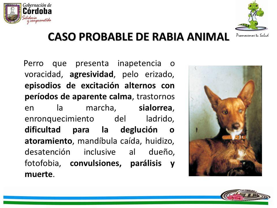 CASO PROBABLE DE RABIA ANIMAL