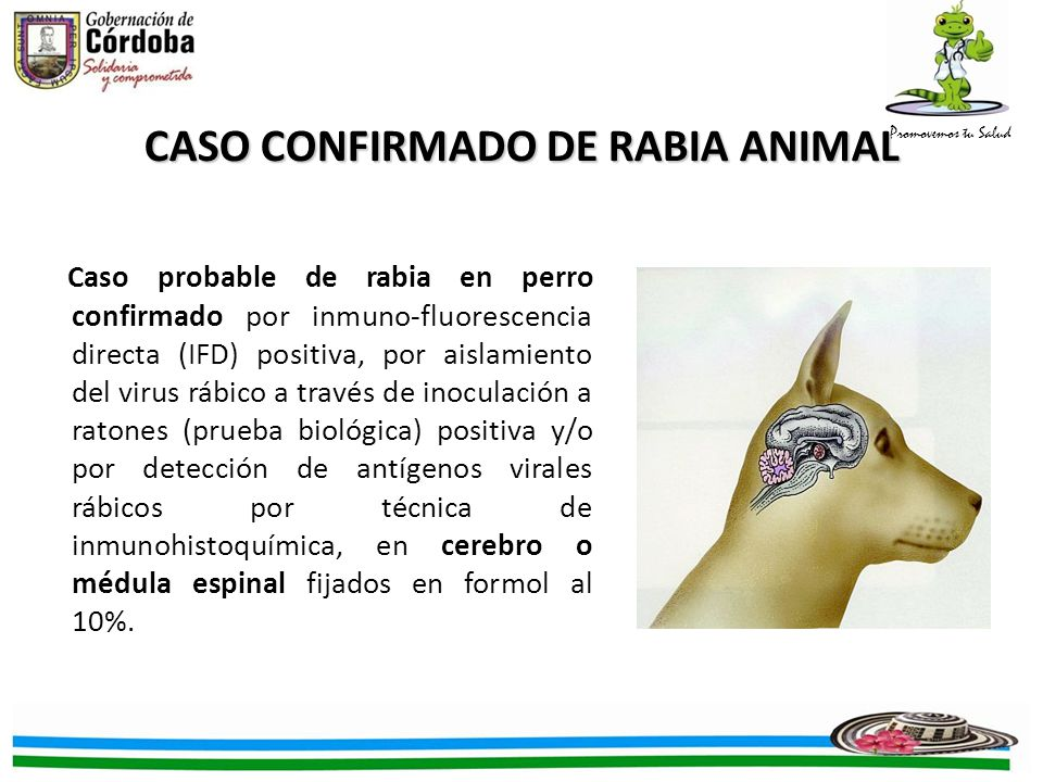 CASO CONFIRMADO DE RABIA ANIMAL