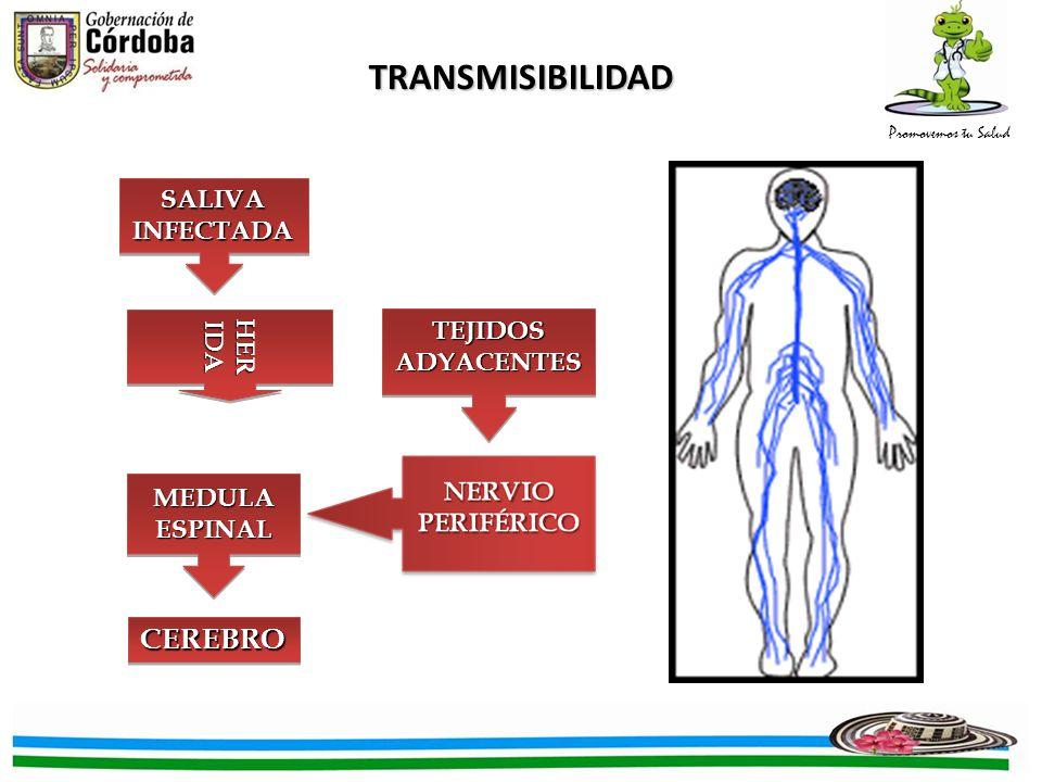 TRANSMISIBILIDAD CEREBRO SALIVA INFECTADA HERIDA TEJIDOS ADYACENTES