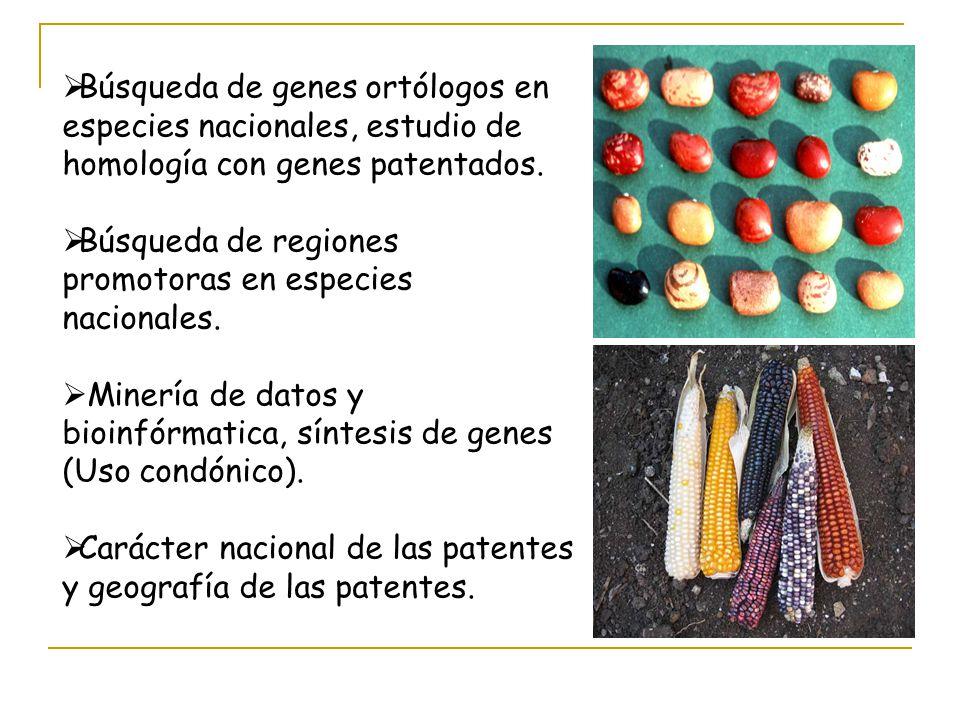 Búsqueda de genes ortólogos en especies nacionales, estudio de homología con genes patentados.