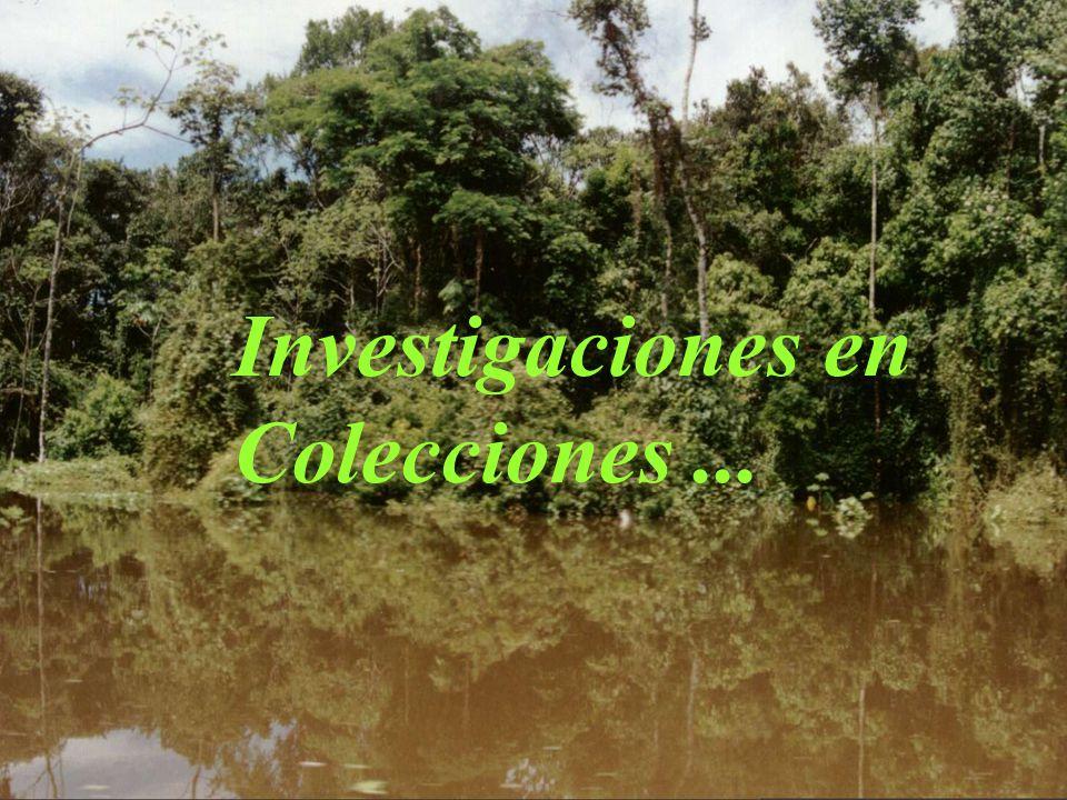 Investigaciones en Colecciones ...