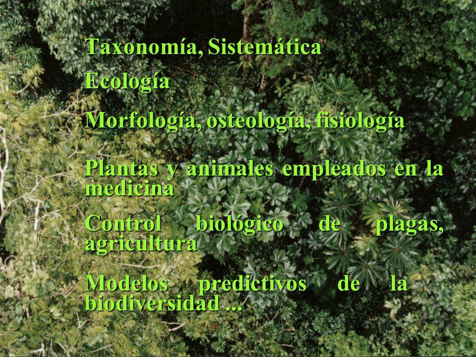 Taxonomía, Sistemática
