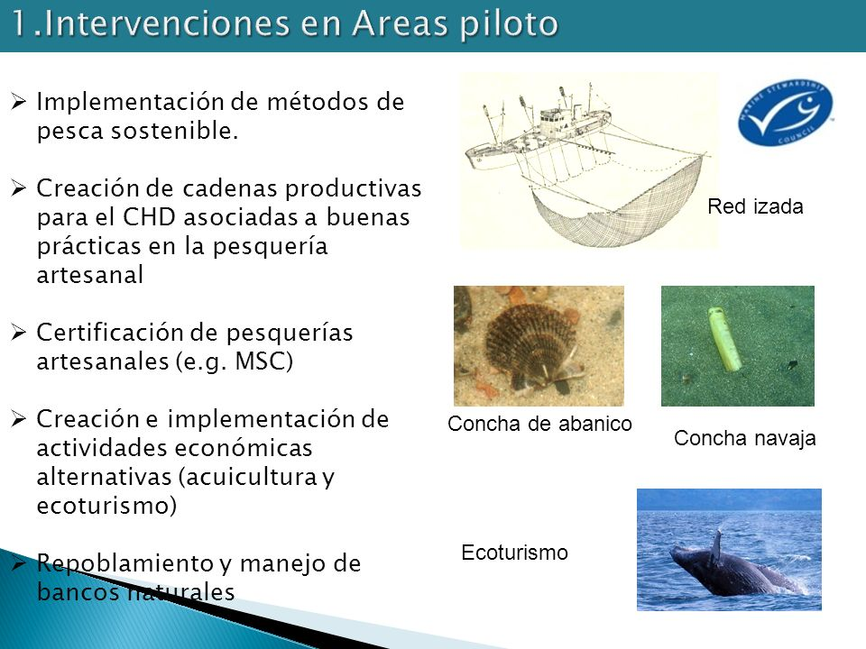 1.Intervenciones en Areas piloto