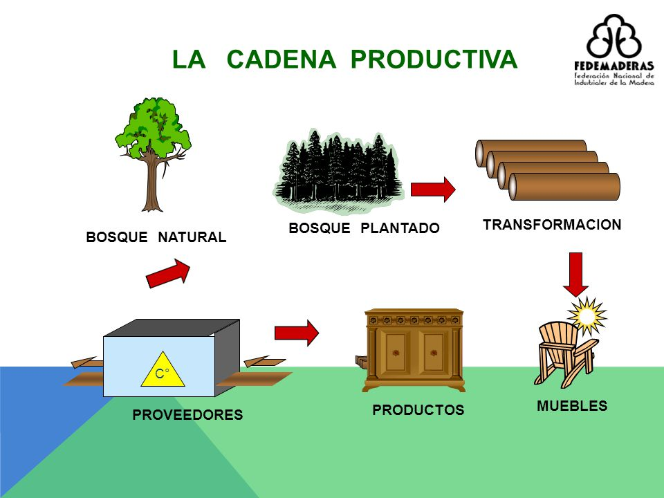 LA CADENA PRODUCTIVA TRANSFORMACION BOSQUE PLANTADO BOSQUE NATURAL