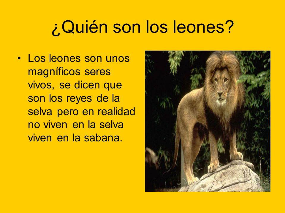 ¿Quién son los leones