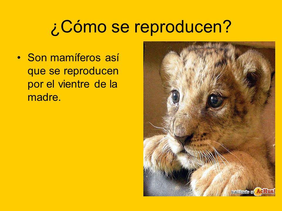 ¿Cómo se reproducen Son mamíferos así que se reproducen por el vientre de la madre.