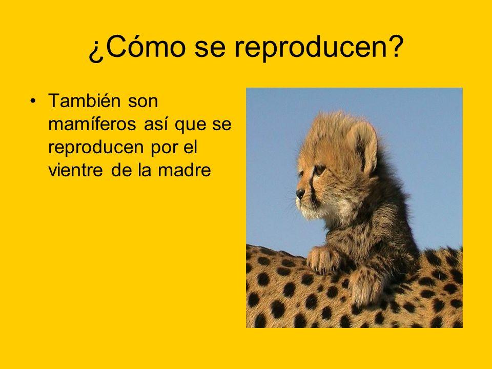 ¿Cómo se reproducen También son mamíferos así que se reproducen por el vientre de la madre