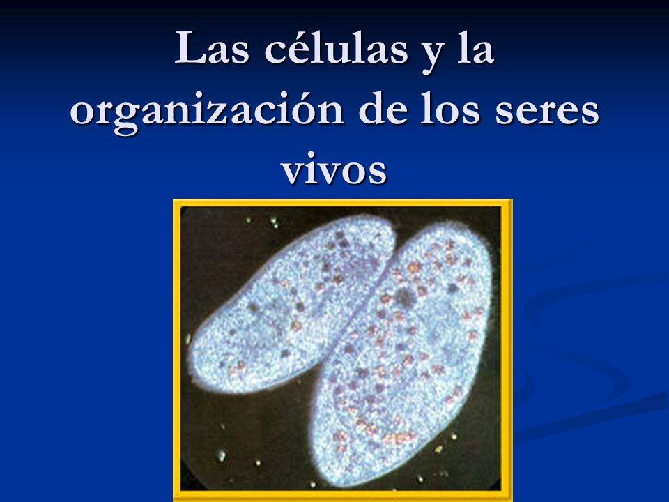 Las células y la organización de los seres vivos