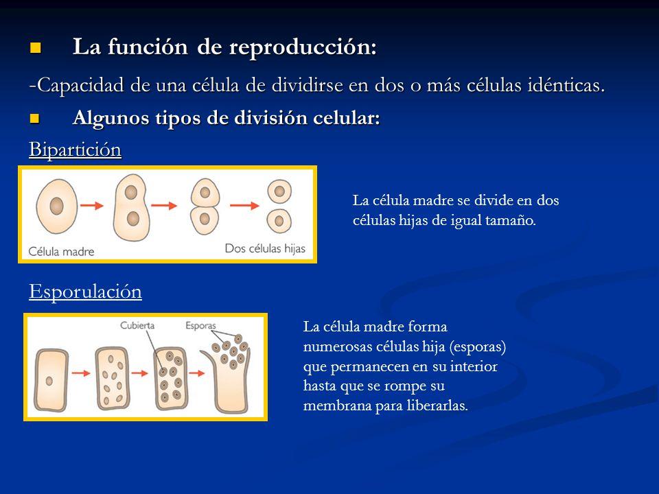La función de reproducción: