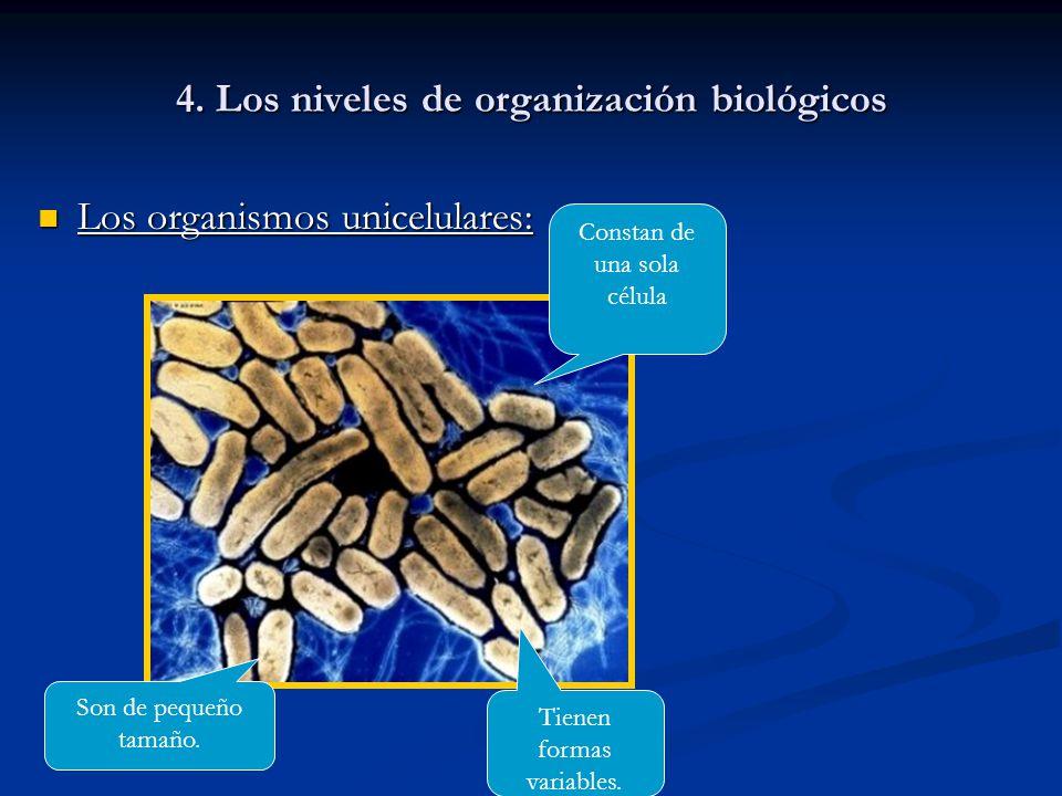 4. Los niveles de organización biológicos