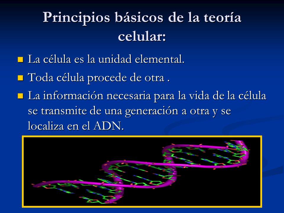 Principios básicos de la teoría celular: