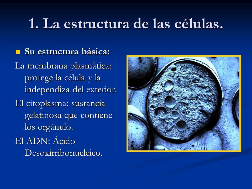 1. La estructura de las células.