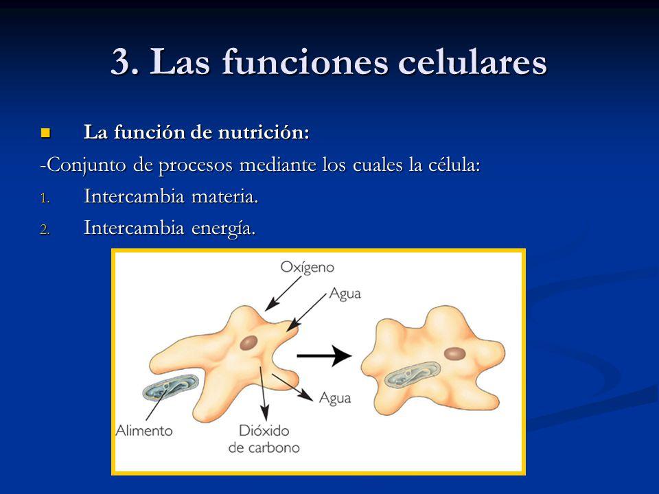 3. Las funciones celulares
