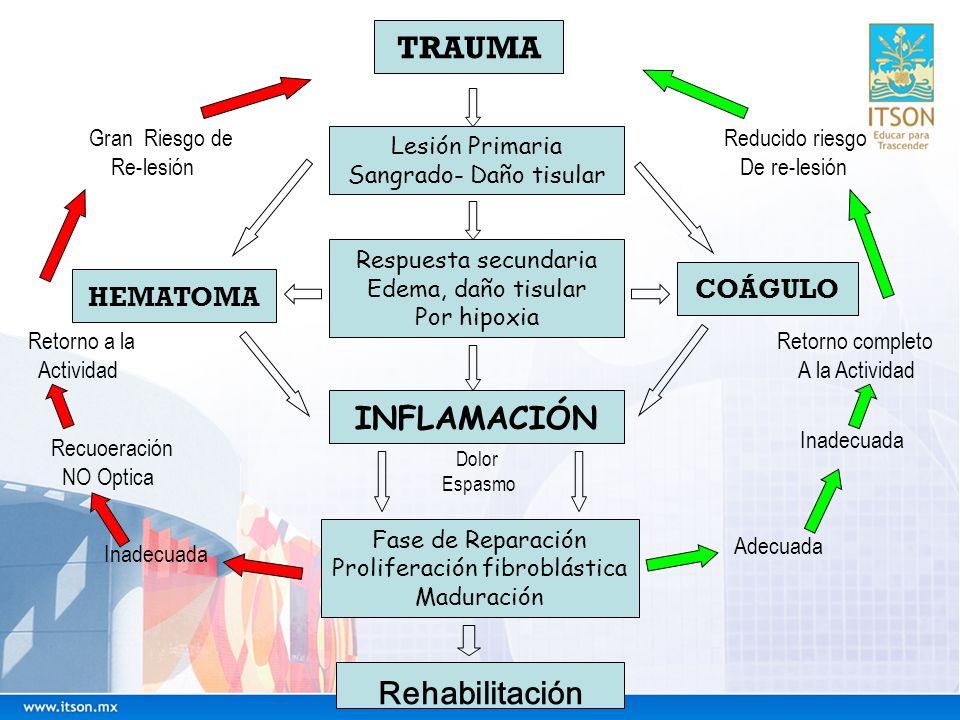 TRAUMA INFLAMACIÓN Rehabilitación COÁGULO HEMATOMA Gran Riesgo de