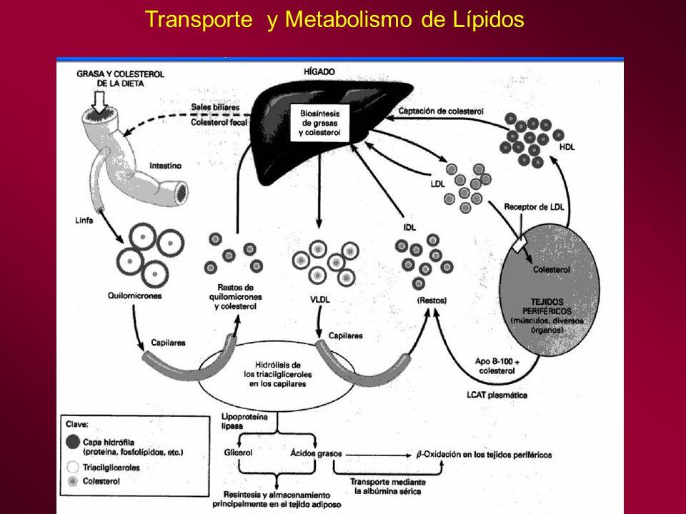 Transporte y Metabolismo de Lípidos