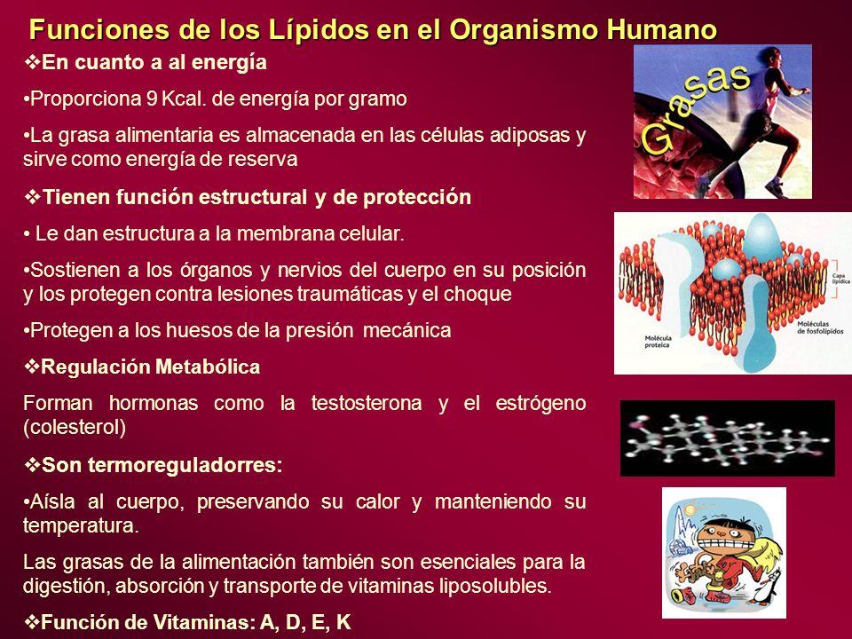 Funciones de los Lípidos en el Organismo Humano