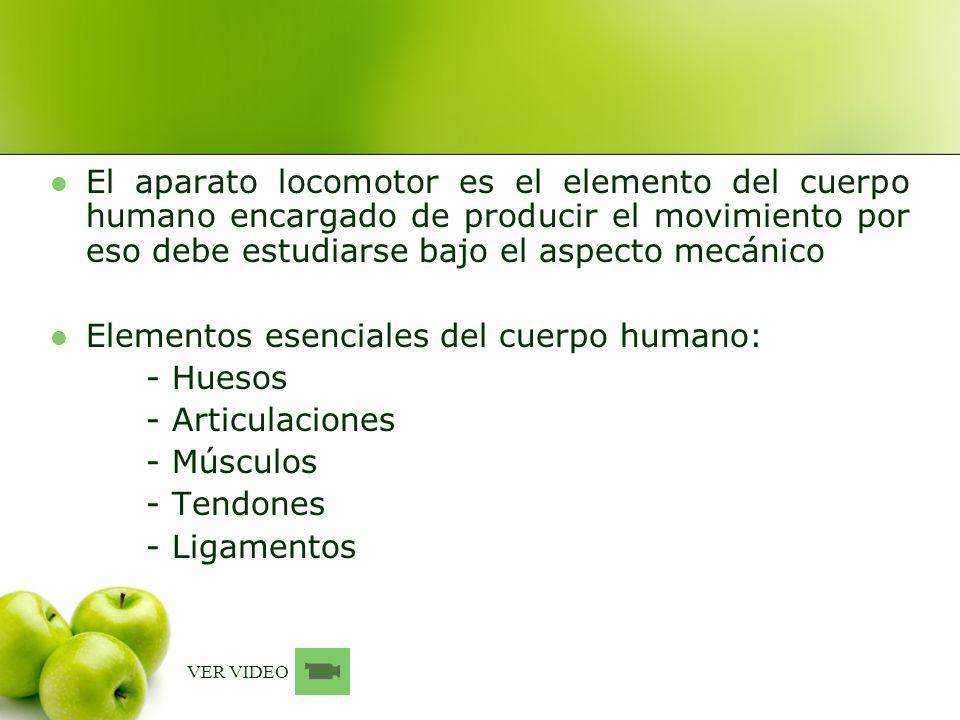 Elementos esenciales del cuerpo humano: - Huesos - Articulaciones