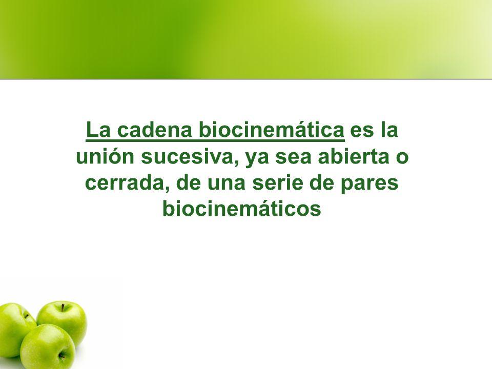 La cadena biocinemática es la unión sucesiva, ya sea abierta o cerrada, de una serie de pares biocinemáticos