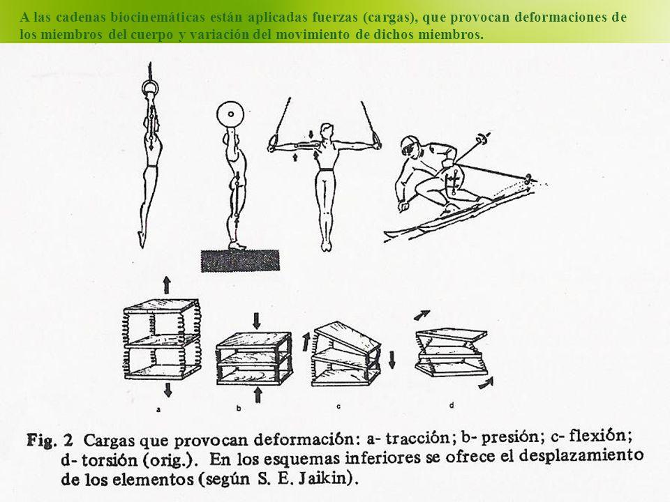 A las cadenas biocinemáticas están aplicadas fuerzas (cargas), que provocan deformaciones de los miembros del cuerpo y variación del movimiento de dichos miembros.