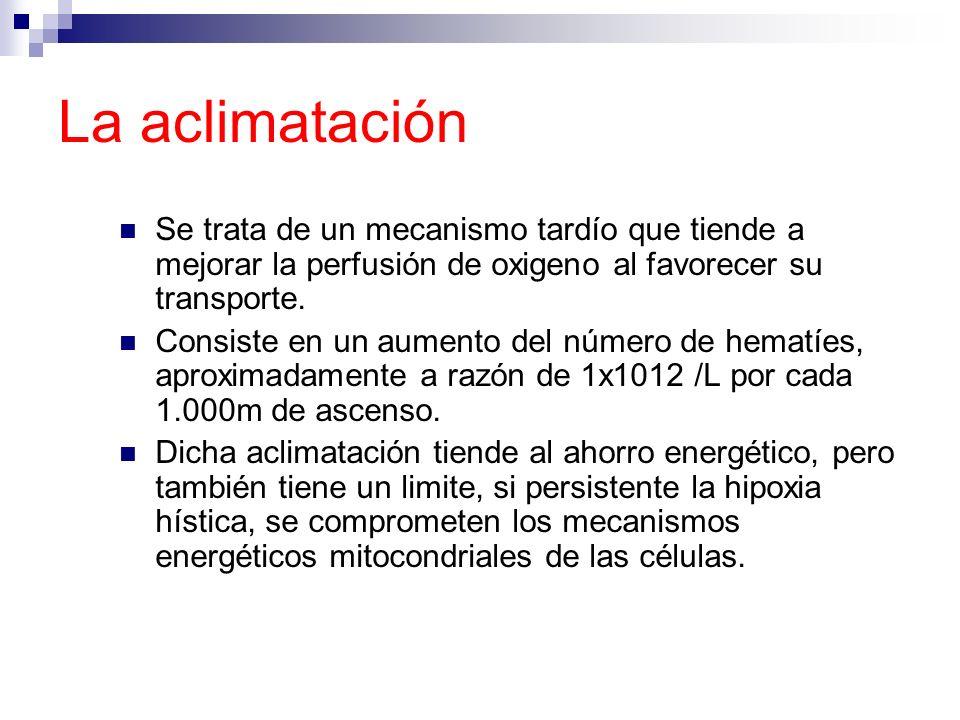 La aclimataciónSe trata de un mecanismo tardío que tiende a mejorar la perfusión de oxigeno al favorecer su transporte.