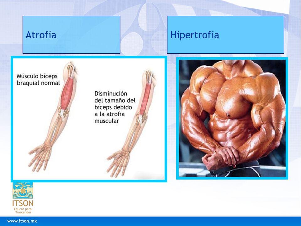 Atrofia Hipertrofia