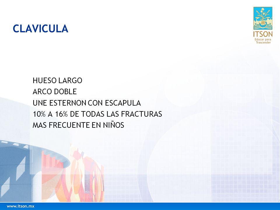 CLAVICULA HUESO LARGO ARCO DOBLE UNE ESTERNON CON ESCAPULA
