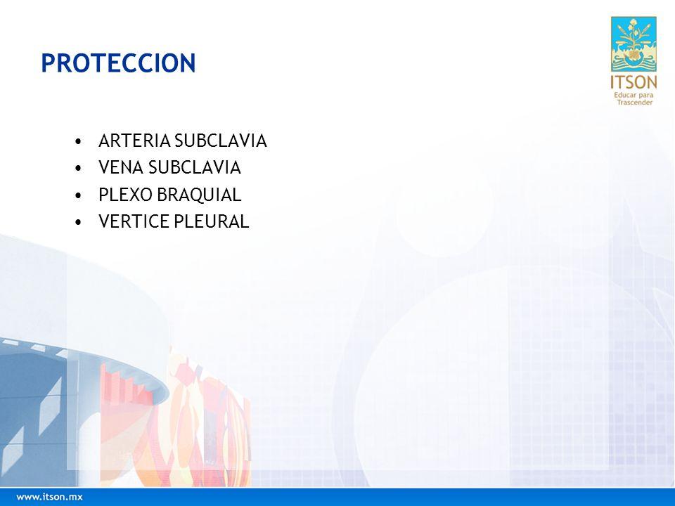 PROTECCION ARTERIA SUBCLAVIA VENA SUBCLAVIA PLEXO BRAQUIAL