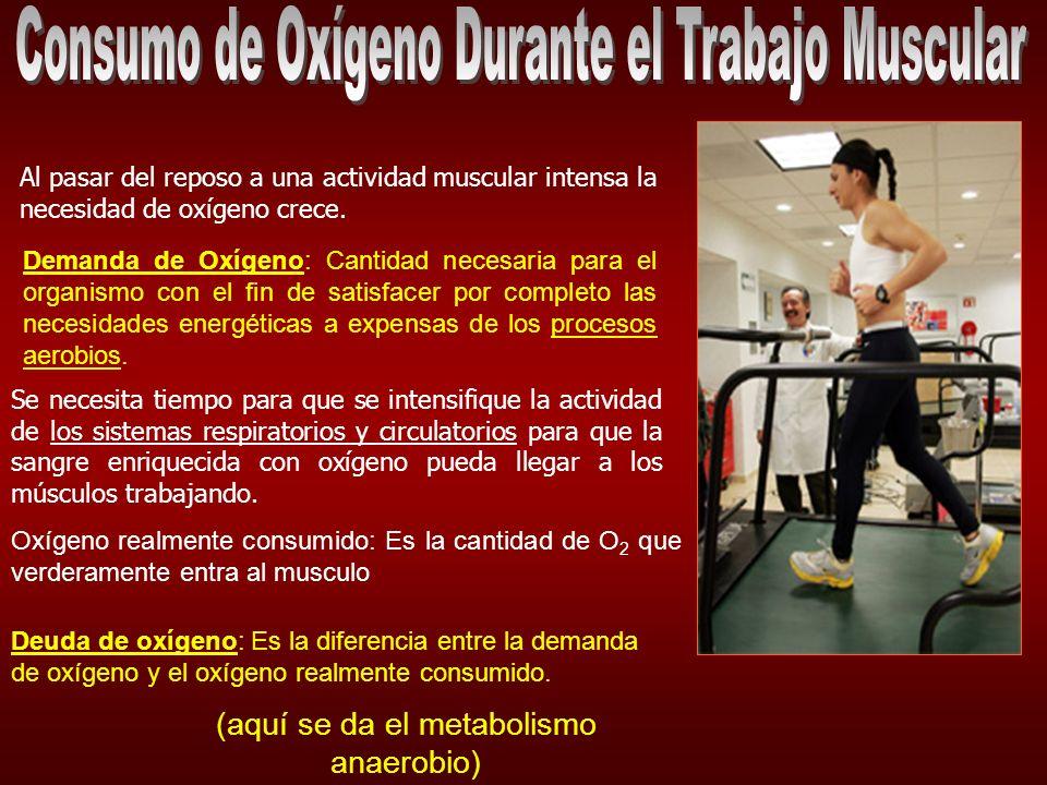 Consumo de Oxígeno Durante el Trabajo Muscular