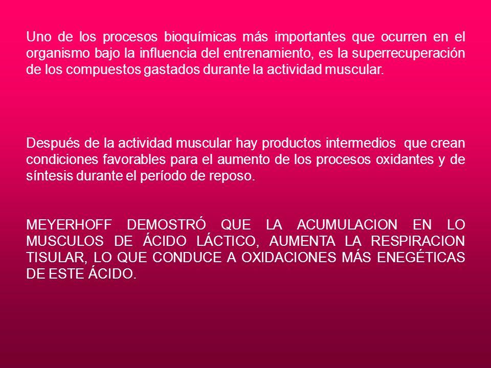 Uno de los procesos bioquímicas más importantes que ocurren en el organismo bajo la influencia del entrenamiento, es la superrecuperación de los compuestos gastados durante la actividad muscular.