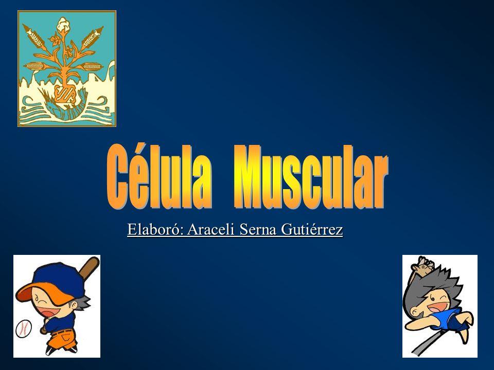 Célula Muscular Elaboró: Araceli Serna Gutiérrez