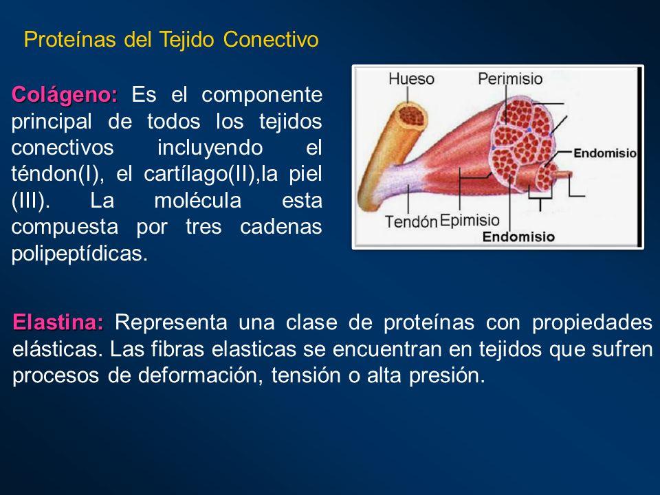 Proteínas del Tejido Conectivo
