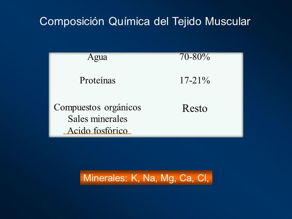 Composición Química del Tejido Muscular